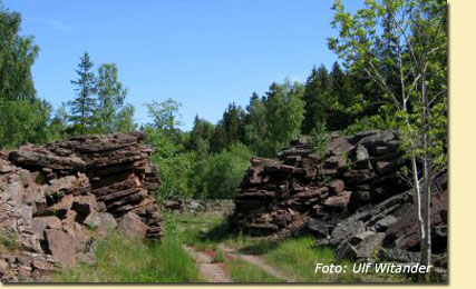 Grone-skog
